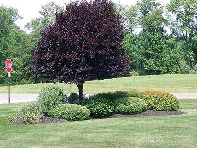 Around Tree Landscaping